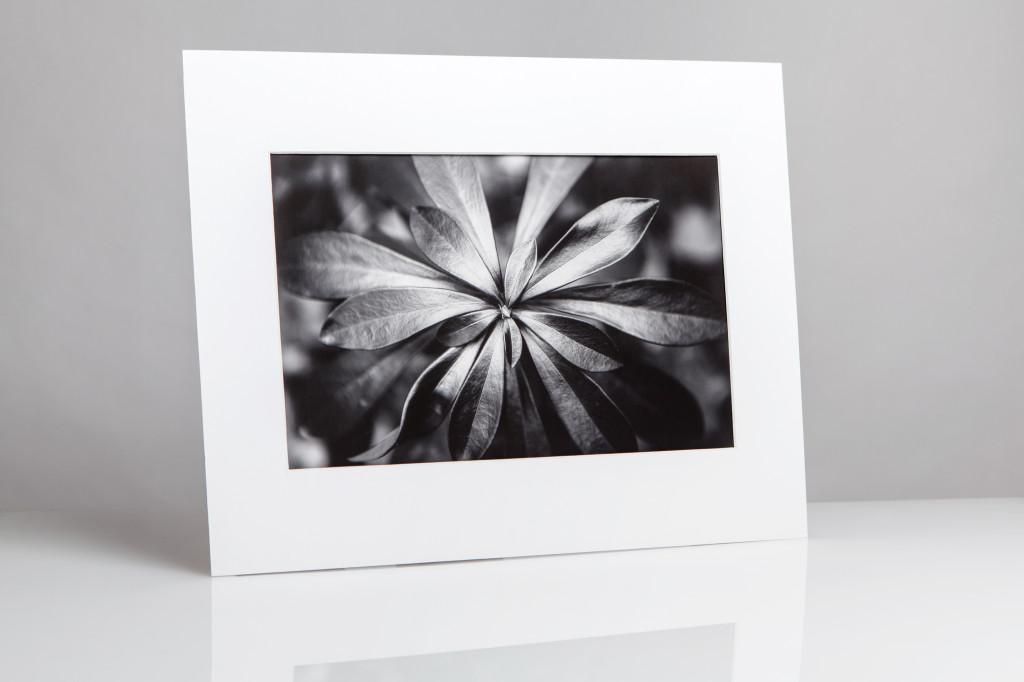 stampa fine art laboratorio brescia
